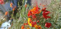 photos by Jenni Dodini for Under the Solano Sun Blog