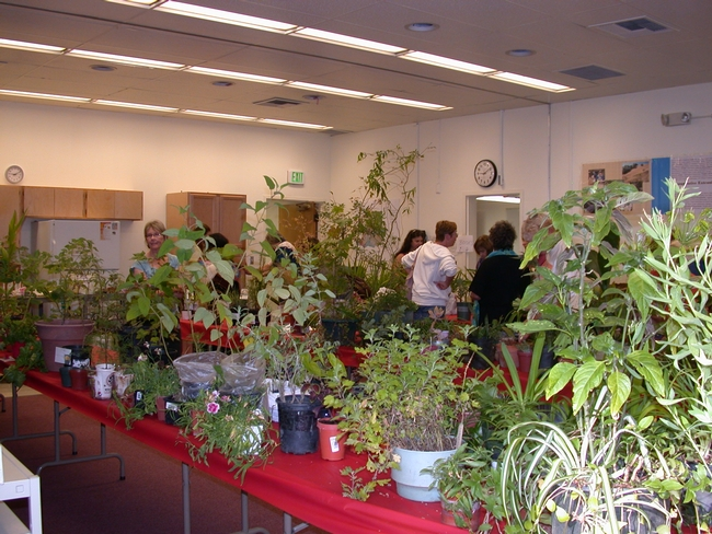 People looking at a variety of plants to take home.