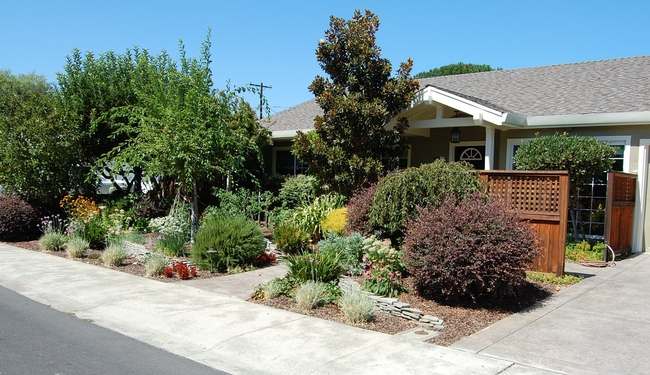 This sunny Vacaville front yard is chock-a-block full of thriving zone-appropriate plantings — including tomatoes — but skips the turf.