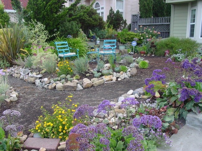 two blue chairs flank a garden path loaded with plants that flower or are interesting in form.
