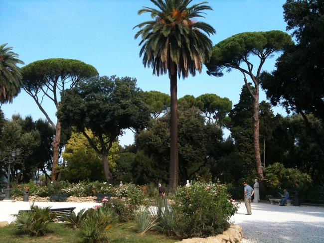 Two stone pines show off their umbrellalike good looks at the Villa Borghese public park in Rome.