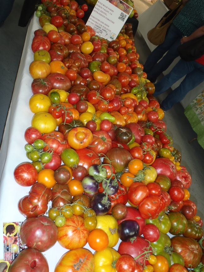 different varieties of tomatoes, note the color variations