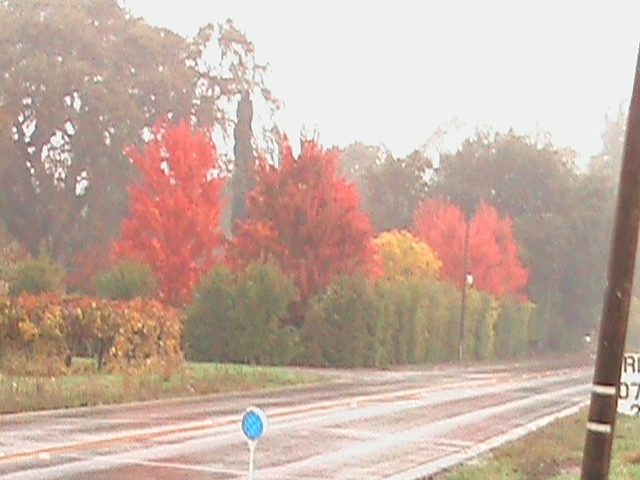 line of colorful trees on country road