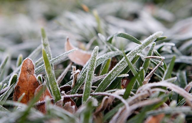 frosty mondo
