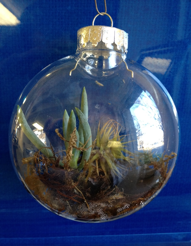 Ornament terrarium.