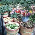 Produce Flowers JVanSoelen 9-10-14