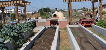 Raised Bed Irrigation - Treasure Island Job Corps Farm for Urban Agriculture Blog