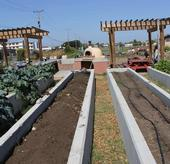 Raised Bed Irrigation - Treasure Island Job Corps Farm
