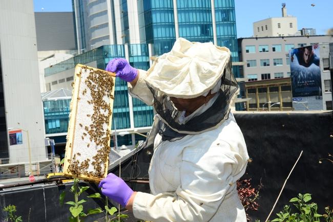 Rooftop beekeeping