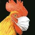 Chicken with surgical mask