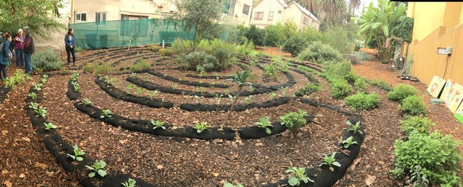 This small urban farm in downtown Los Angeles is part of the Episcopal Diocese Seeds of Hope program. It includes a living labyrinth for reflection, as well as flowers, fruit trees, herbs and vegetables for distribution in the community.