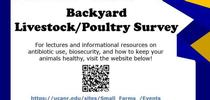 Backyard Poultry Survey for Urban Agriculture Blog