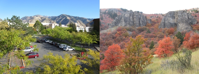 Utah State University campus, Logan & fall colors in Logan Canyon