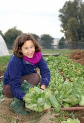 Un día de cosecha para Lauren Asher en la Granja de Estudiantes de UC Davis.