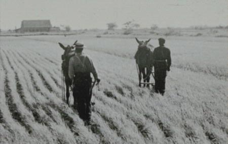 """Algunos suspiran por la simplicidad de la agricultura estadounidense de antaño pero """"aquéllos eran días largos, mi amigo""""."""