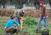 Estudiantes cosechando