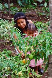 Agricultora y niño en el campo de tomate en Centroamérica.