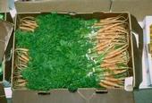Los diferentes híbridos de zanahorias son ideales para las diferentes necesidades.