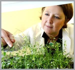 Mary Wildermuth en su laboratorio en la UC Berkeley. (Foto de Peg Skorpinski).