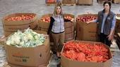 Allison Pratt y Jenny Lowe, del Condado de Alameda, son quienes administran la normas acerca de nutrición. Fotografía-Molly Oleson.