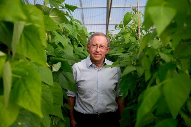 Paul Gepts encabeza el programa de producción de frijoles de UC Davis. (Fotografía: Joe Proudman, UC Davis)