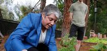 La Presidenta Napolitano trabaja en el huerto administrado por estudiantes de UCLA ante la mirada del estudiante Ian Davies. for Blog de Alimentos Blog