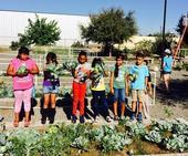 Estudiantes de tercer grado de la primaria Pixley en su huerto de verano.