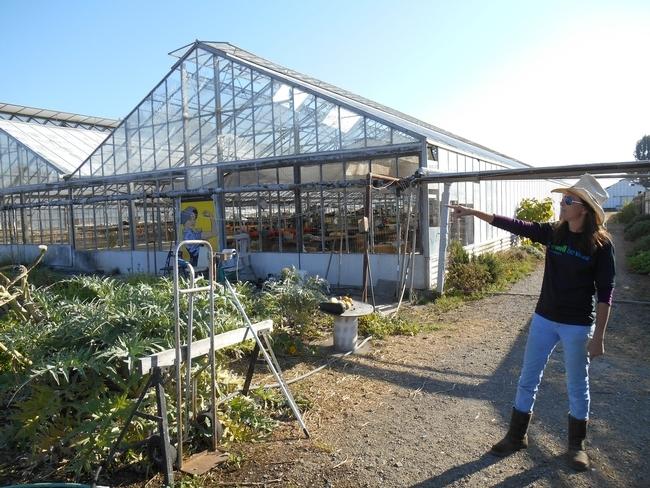 Pilar Rebar, granjera urbana, y el equipo de UC ANR recorriendo las instalaciones de su granja en Richmond, California.