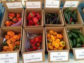 Una selección de chiles picantes, un cultivo de California que le agrega sabor a la vida.