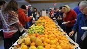 Cientos de frutas cítricas para ser probadas en el evento degustación del año pasado.