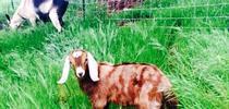 El objetivo del estudio es mejorar las medidas de seguridad alimentaria en granjas en las que también se crían animales. for Blog de Alimentos Blog