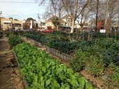 La granja City Slicker, un supermercado granjero comunitario en Oakland.