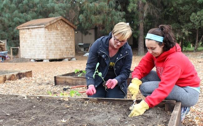 Britta Hansen y Elise Brockett plantan okra y otras verduras en el Laboratorio de Innovación Hortícola que abrirá sus puertas en el Día Mundial de los Alimentos.
