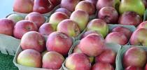 El otoño marca el auge de la temporada de manzanas en California. Es el momento perfecto para preservarlas. for Blog de Alimentos Blog