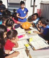 Los estudiantes exploran varias calabazas ayudados por el personal de UC CalFresh.
