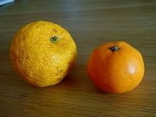 Yuzu (izq) comparado con la mandarina (dcha). Fotografía de Wikipedia.
