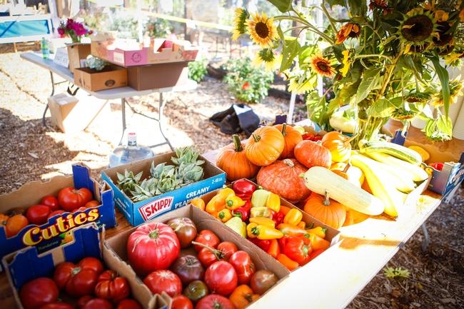 """Productos cosechados por los jardineros maestros de la UC, uno de """"Our Garden"""", localizado en el condado de Contra Mesa."""