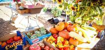 """Productos cosechados por los jardineros maestros de la UC, uno de """"Our Garden"""", localizado en el condado de Contra Mesa. for Blog de Alimentos Blog"""