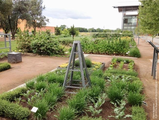 El Huerto Good Life en el Instituto Robert Mondavi para Vino y Ciencias Alimentarias incluye verduras, hierbas de olor y flores. Fotografía: Claire Napawan.