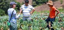 Meagan Terry (izq), investigadora de UC Davis para el Laboratorio de Innovación Hortícola en Guatemala, con asesor guatemalteco y un joven miembro del grupo. (Fotografía por Beth Mitchman). for Blog de Alimentos Blog