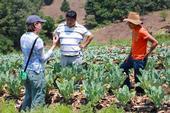 Meagan Terry (izq), investigadora de UC Davis para el Laboratorio de Innovación Hortícola en Guatemala, con asesor guatemalteco y un joven miembro del grupo. (Fotografía por Beth Mitchman).