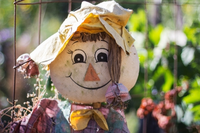 Los espantapájaros sirven como decoración durante el otoño pero también ayudan a espantar a los pájaros y animales no deseados en su huerto. (Fotografía: Melissa Womack)