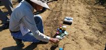 La asesora de Extensión Cooperativa Gene Miyao observa un biofertilizador en todas sus fases, desde desperdicio hasta fertilizante. for Blog de Alimentos Blog
