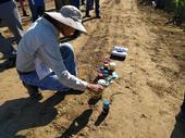 La asesora de Extensión Cooperativa Gene Miyao observa un biofertilizador en todas sus fases, desde desperdicio hasta fertilizante.