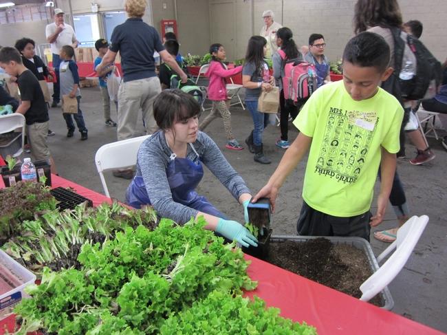 Varios voluntarios disfrutan asistiendo a cada estudiante a obtener su semillero para un buen inicio.