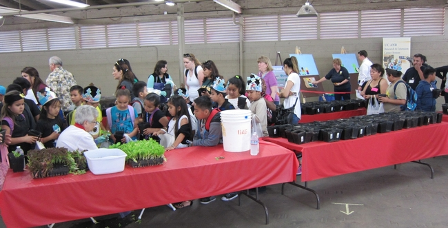Los estudiantes del Valle Central esperaban entusiasmados en la línea para empezar a plantar sus lechugas.