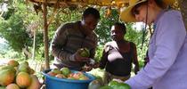 Mary Lu Arpaia inspecciona aguacates producidos localmente que se venden en un puesto a la orilla del camino. (Fotografía: Mark Hoddle) for Blog de Alimentos Blog