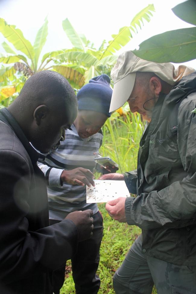 Mark Hoddle y técnicos en la extensión del aguacate examinan e identifican insectos recogidos en una huerta de aguacates en el distrito de Rungwe en Tanzania. (Fotografía: Mary Lu Arpaia)