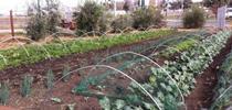 Talleres de la Extensión Cooperativa de la UC en Los Ángeles ayudará a los granjeros urbanos a incrementar su conocimiento sobre regulación, producción, mercadeo y seguridad alimentaria. for Blog de Alimentos Blog