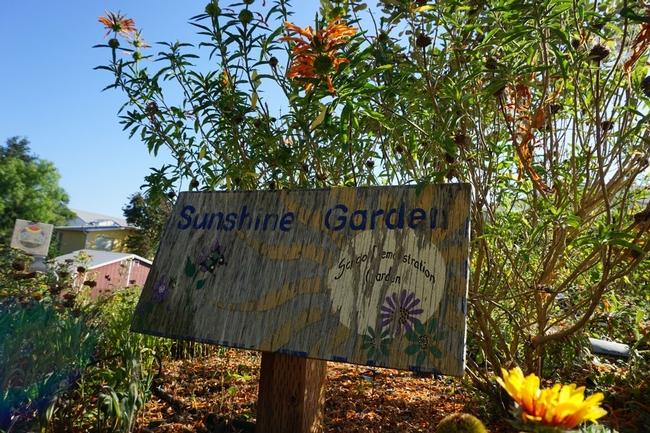 El Sunshine Garden es una sección de demostración del huerto de Jardinero Maestro de la UC, que se encuentra adyacente al estacionamiento de Extensión Cooperativa de San Luis Obispo. Es un huerto modelo que puede ser reproducido en las escuelas locales y se usa para capacitar a los voluntarios de Extensores de Nutrición en el Huerto.
